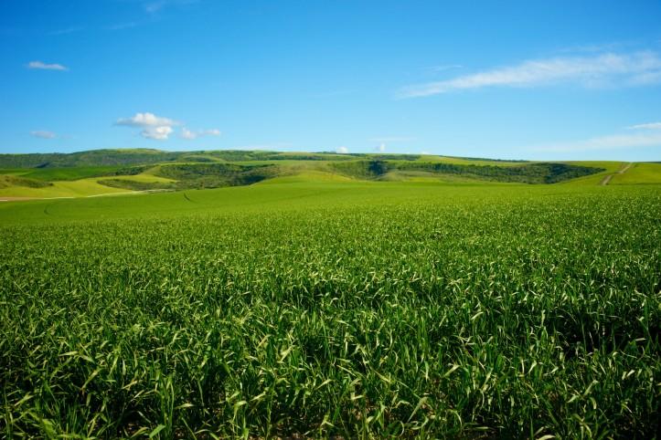 green-midwest-farmland
